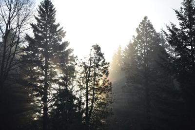 Sunrise from behind trees, through mist